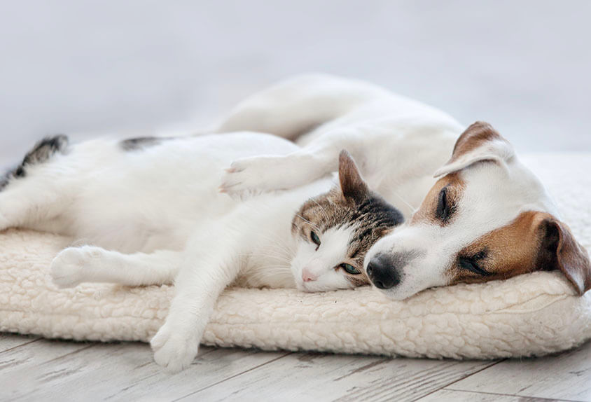 dog and cat sleeping together on pet bed during d'tails pet service visit